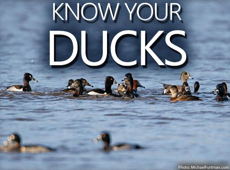 DU Pulse: Know Your Ducks