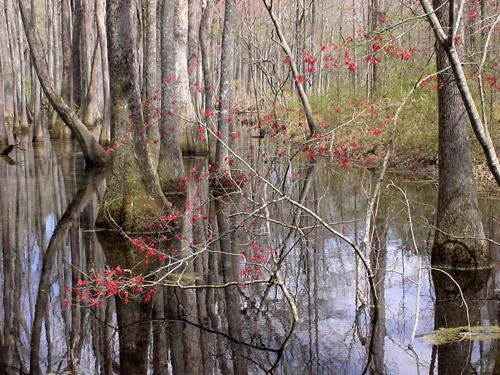 Mississippi Delta wetland
