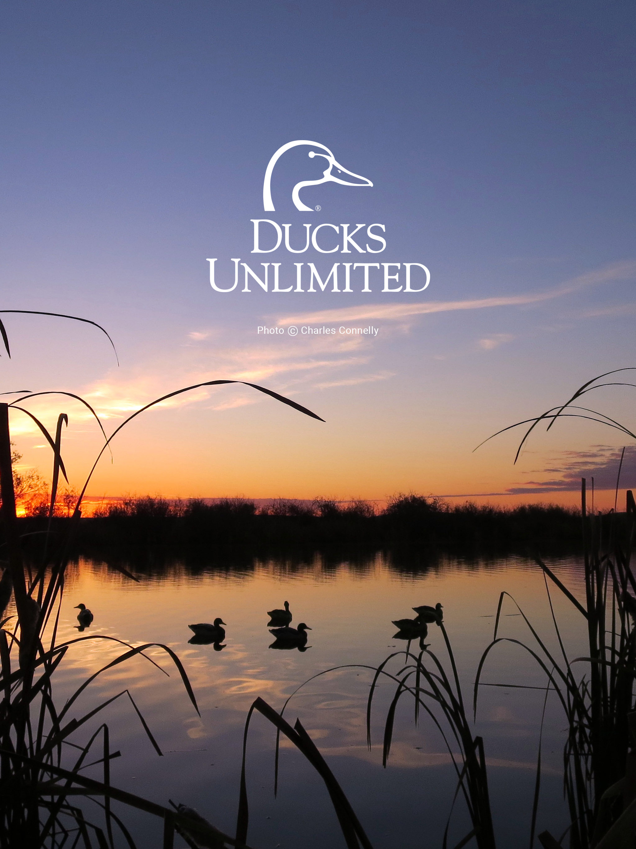 ducks unlimited mobile wallpaper