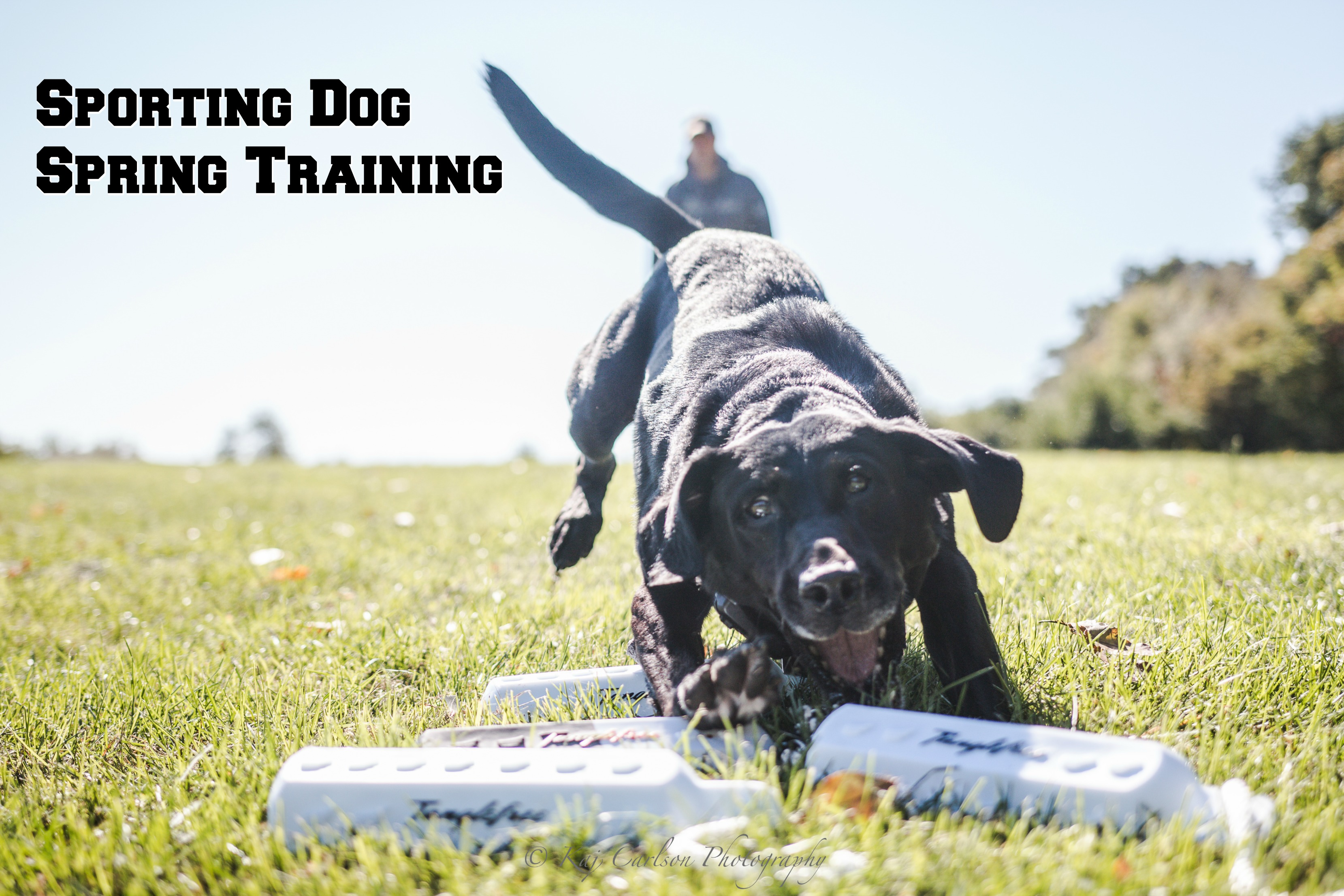 DU Newsletter May 2018: The Sporting Dog Spring Training Issue