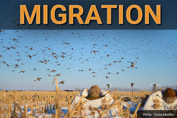 DU Newsletter: The Migration Issue (Dec. 2018)