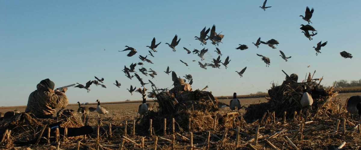 12 Tips for Hunting Geese
