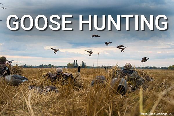 DU Newsletter: The Goose Hunting Issue (Nov. 2018)