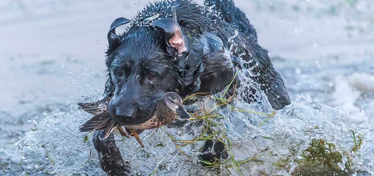 10 Performance Tips for Retrievers