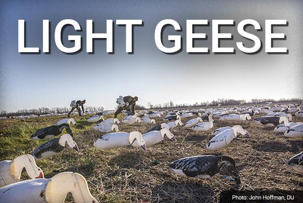 DU Newsletter: The Light Geese Issue (Feb. 2019)