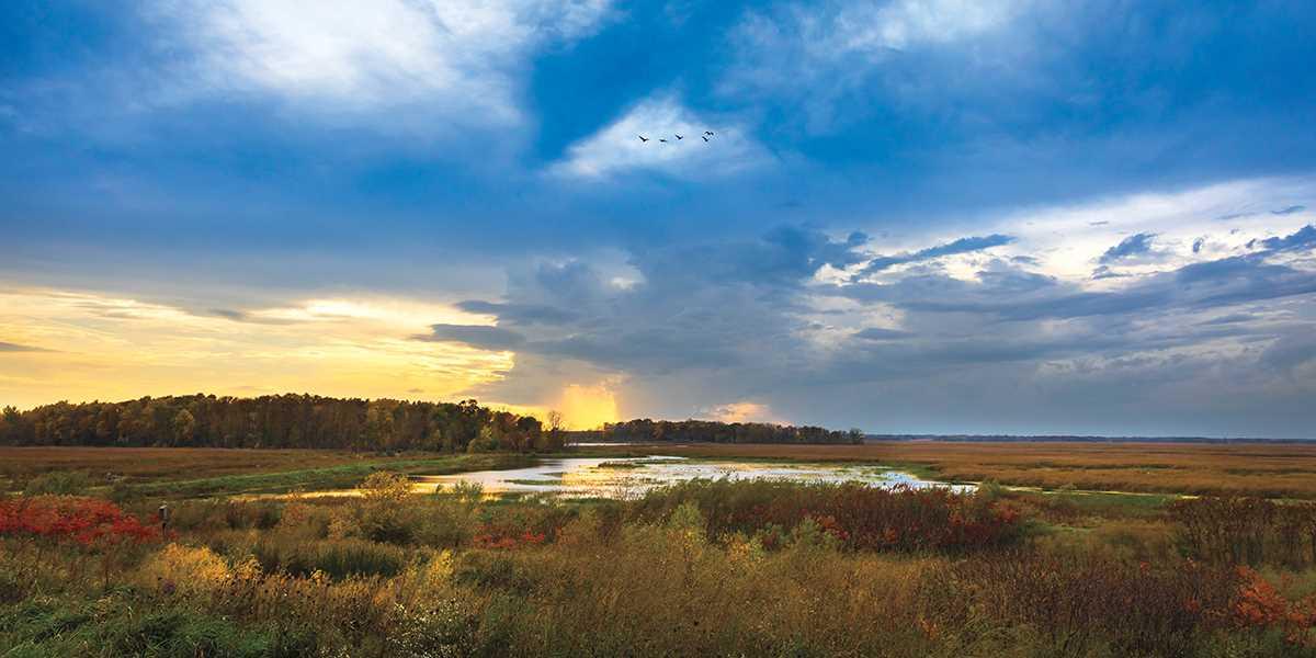 Our Favorite Marsh