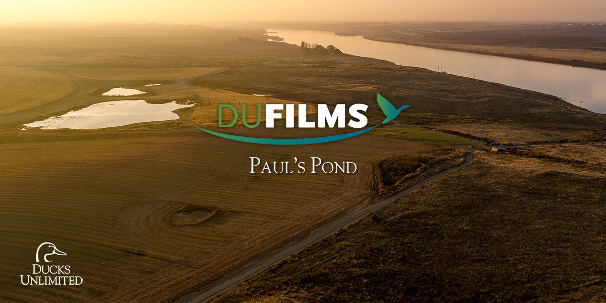 DU Films