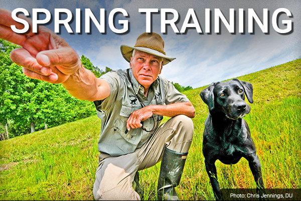DU Newsletter: The Sporting Dog Spring Training Issue (May 2019)