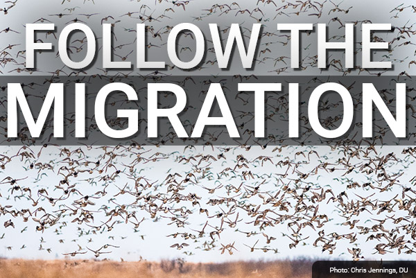 DU Newsletter: Follow the Migration (Nov. 2019)