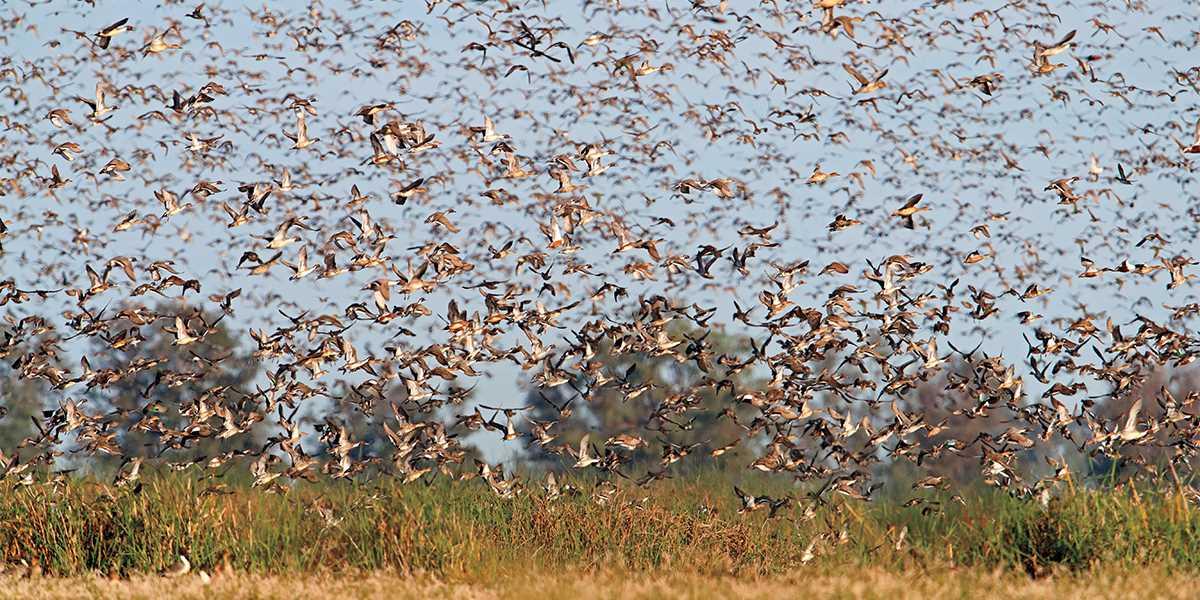 Understanding Waterfowl