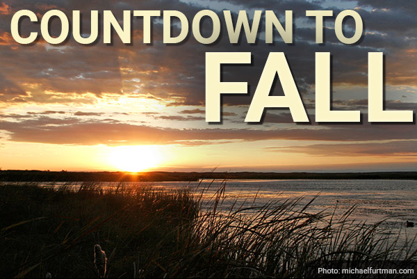 DU Newsletter: The Countdown to Fall (Aug. 2020)