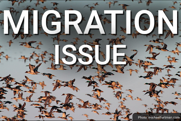 DU Newsletter: The Migration Issue (Dec. 2020)