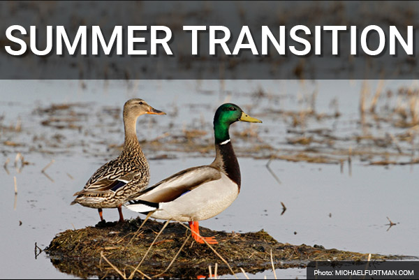 DU Newsletter: The Summer Transition Issue (June 2020)