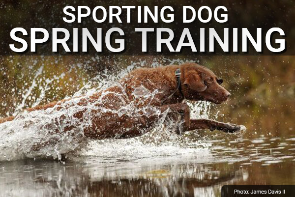 DU Newsletter: The Sporting Dog Spring Training Issue (May 2020)