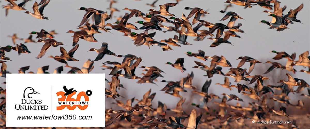 www.waterfowl360.com