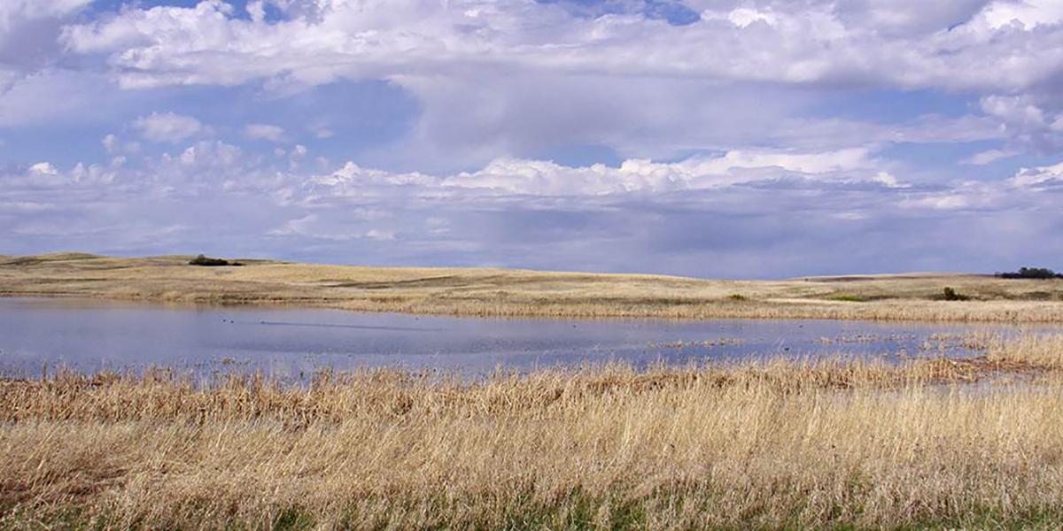 The Power of Wetlands