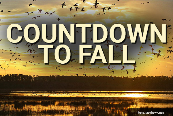 DU Newsletter: The Fall Prep Issue (August 2021)