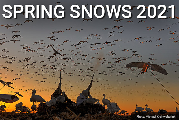 DU Newsletter: The Spring Snows Issue (Feb. 2021)