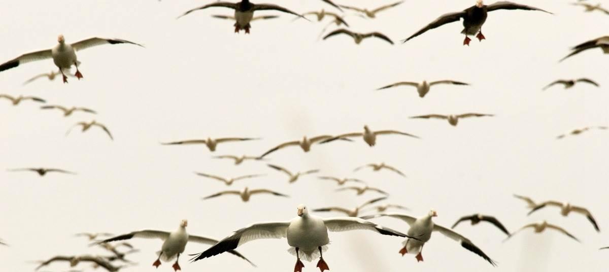 Migration Alert