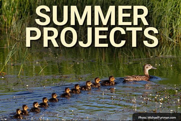 DU Newsletter: The Summer Projects Issue (June 2021)