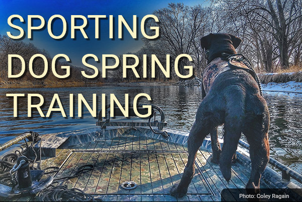 DU Newsletter: The Sporting Dog Spring Training Issue (May 2021)