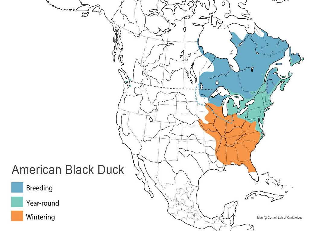 Black Duck Distribution