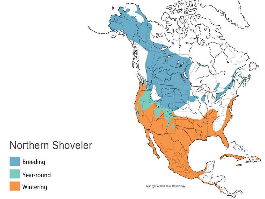 Northern Shoveler Distribution