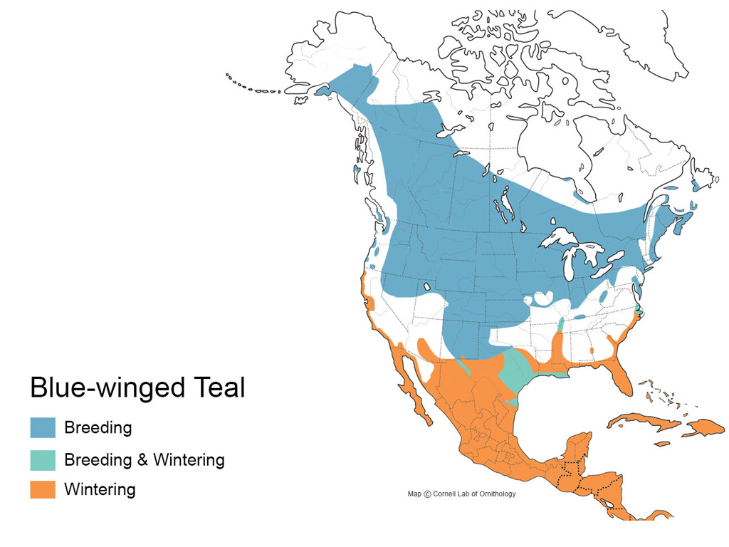 Blue Wing Teal Distribution