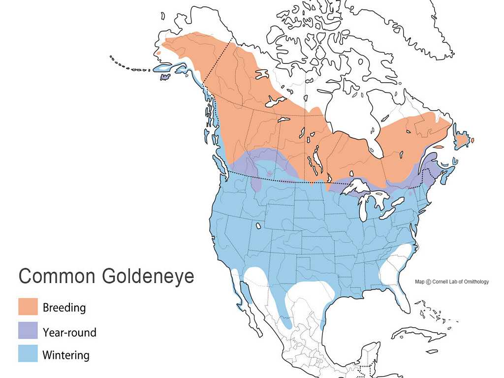 Common Goldeneye Distribution