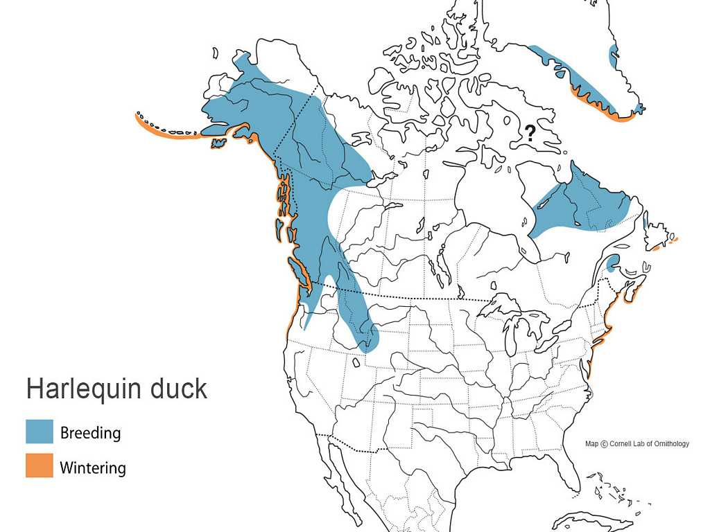 Harlequin Duck Distribution