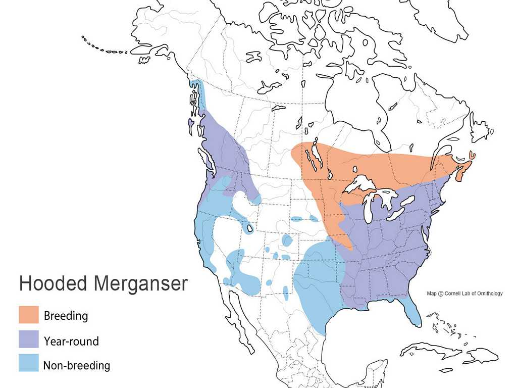 Hooded Merganser Distribution