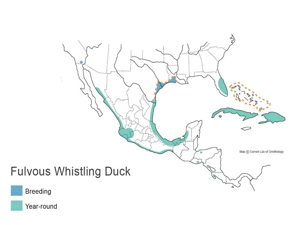 Fulvous Whistling Duck Distribution