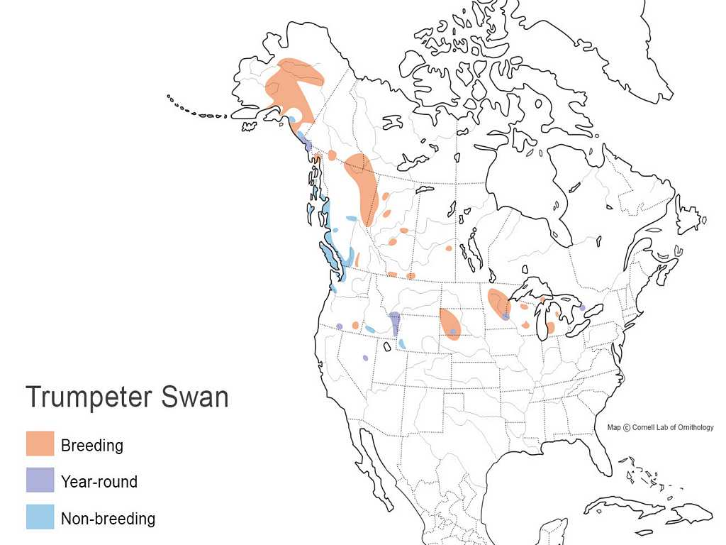 Trumpeter Swan Distribution